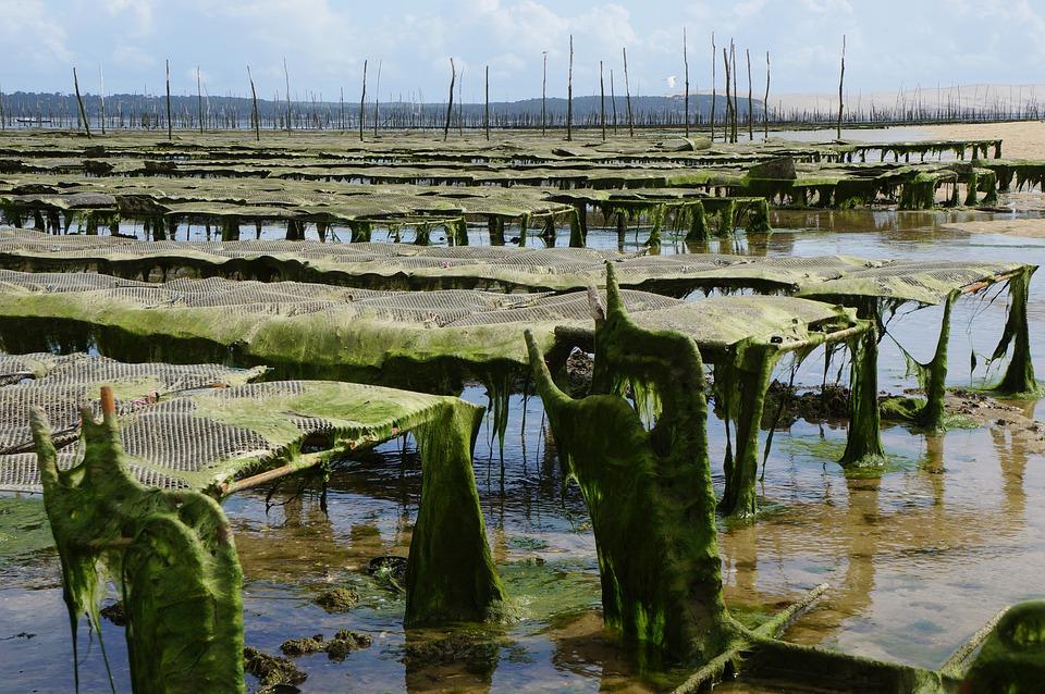 Recrutement: commercial export - ostréiculture F/H chez Emeraude RH à Noirmoutiers