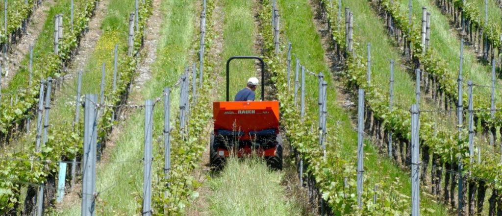 Recrutement: Ouvrier(ère) viticole F/H chez GE16 Emploi à Cognac